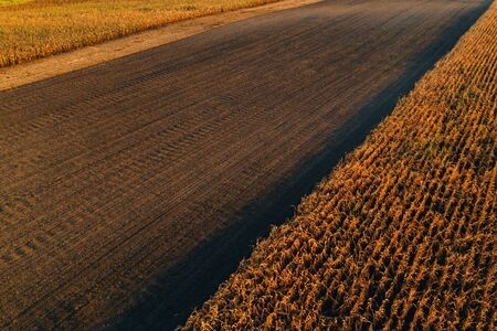 Aerial view of agricultural fields. Corn maize crop plantation from drone pov.
