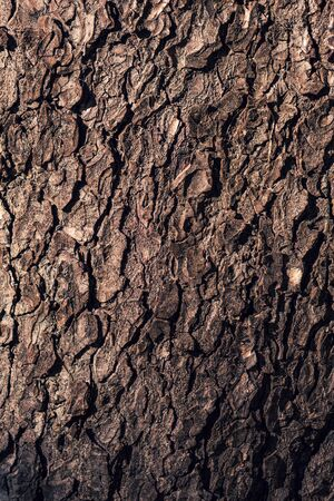 Tree bark rough texture as natural background, surface of wooden trunk crust Zdjęcie Seryjne
