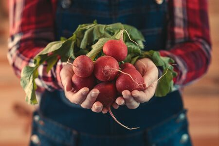 Female farmer holding bunch of harvested radishes, close up of hands, selective focus