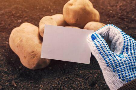 Organic potato farmer holding blank business card mock up above freshly harvested pile of tubers