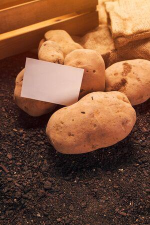 Organic potato tuber and business card mock up ob vegetable garden soil