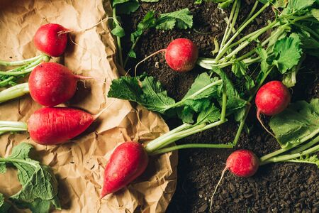 Red garden radishes on ground after harvest, organic homegrown produce ready to be packed and sent to farmer's market, top view