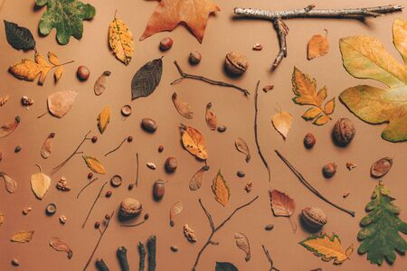 Autumn season flat lay top view background with branches, leaves and nuts Zdjęcie Seryjne