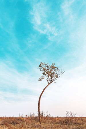 Lonely curved slim tree in plain landscape, autumn scenery Zdjęcie Seryjne