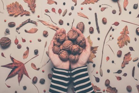 Handful of whole walnut fruit from above, female hands holding nuts over autumn season decorated table, retro toned image with selective focus Banco de Imagens