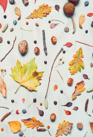 Flat lay autumn season decoration, top view of leaves and branches pattern for background