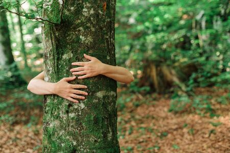 Environmentalist tree hugger is hugging wood trunk in forest, female arms around the tree, selective focus Banco de Imagens