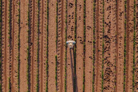 Aerial view of farmer in soybean field flying a drone with remote controller