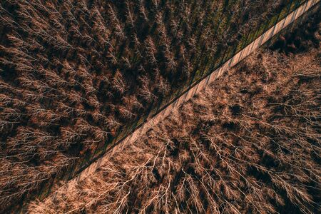 Aerial view of empty road through cottonwood forest, top view drone photography Banco de Imagens