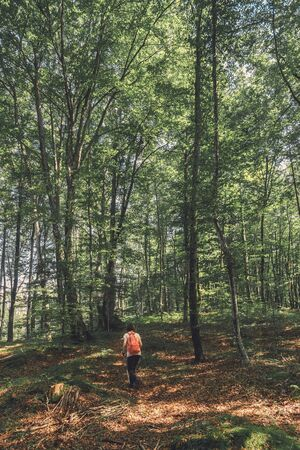 Female hiker is trekking on footpath in forest on sunny summer day