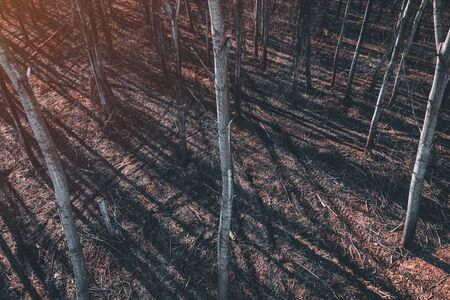 Tire track tread marks in aspen tree forest, high angle view from drone pov