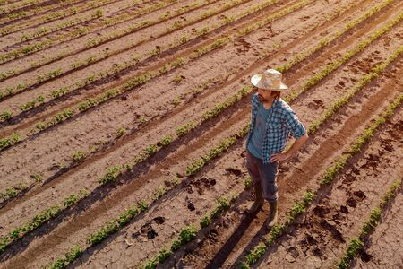 Farmer standing in cultivated soybean field and observing crops development, high angle view from drone pov