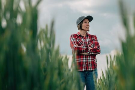 Wheat farmer agronomist standing in cultivated cereal crops agricultural field with arms crossed and uncertain face expression worried about bad condition his crops are in Stock Photo