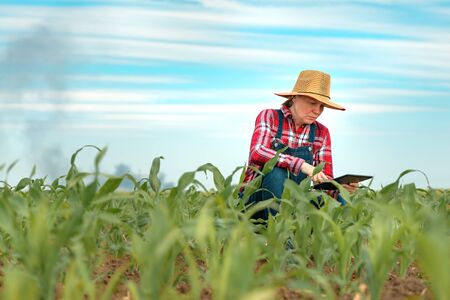 Concerned female farmer with digital tablet in corn field looking at black smoke on horizon, concept of insurance in agriculture and farming