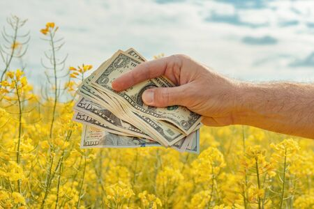 Yield and profit of canola rapeseed growth, farmer holding american paper currency in field Reklamní fotografie