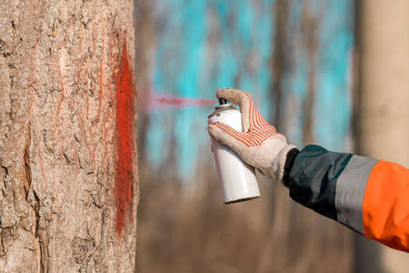 Forestry technician marking tree trunk for cutting in deforestation process, forester spray painting woods with aerosol can paint, close up of hand Stock fotó