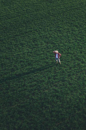Wheat farmer standing and looking over wheatgrass field, aerial view of adult male farm worker examining plantation