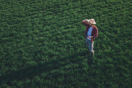 Wheat farmer using drone remote controller in wheatgrass field. Aerial view of male farm worker observing cultivated farmland from drone pov. Banque d'images