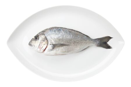 Dorada seafood on a white oval dish isolated on white background. Also known as bream sea fish. Raw food. photo