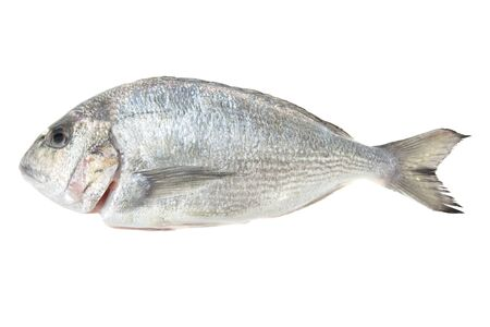 bream: Dorada seafood isolated on white background  Also known as bream sea fish  Raw food  Stock Photo