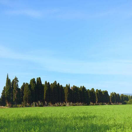 a long poem: Bolgheri famous cypresses trees boulevard landscape  Long exposure 4 minute photography  Maremma, Tuscany, Italy, Europe This boulevard is famous for the Carducci poem  Stock Photo