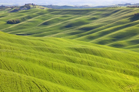 Tuscany, undulating terrain in Crete Senesi country landscape, Italy, Europe  Rolling Hills, green fields with sunlight on sunset and a farm with cypresses trees  photo
