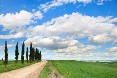 Cypress Trees row, a traditional white road, green field and blue cloudy sky. Rural landscape in Crete Senesi land near Siena, Tuscany, Italy, Europe. photo