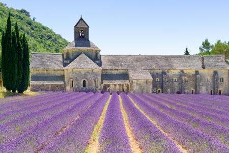lavanda: Abad�a de Senanque y las filas de lavanda florecen las flores Gordes, Luberon, Vaucluse, Provenza, Francia, Europa Foto de archivo