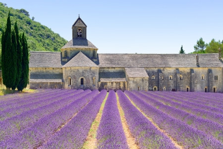 vaucluse: Abbey of Senanque and blooming rows lavender flowers  Gordes, Luberon, Vaucluse, Provence, France, Europe