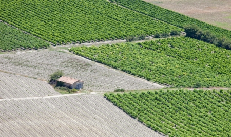 Vineyards rows and rural hut from an aerial view  Countryside landscape in Luberon, Provence, France  photo
