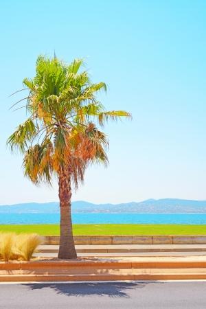 azure coast: Saint Raphael beach, sea bay and palm  Azure Coast, Provence, France