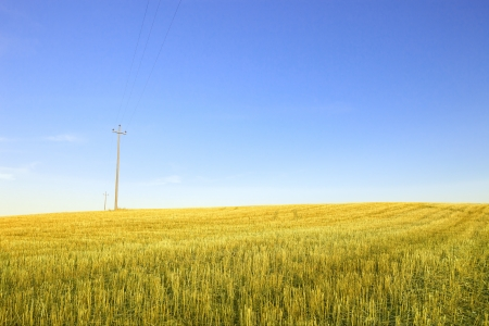 Harvested green wheat field, electric power line and  blue sky photo