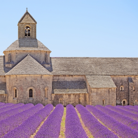 Abbey of Senanque and blooming rows lavender flowers, detail  Gordes, Luberon, Vaucluse, Provence, France, Europe  photo
