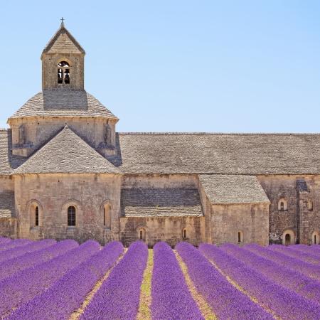 Klostret Senanque och blommande rader lavendel blommor, detalj Gordes, Luberon, Vaucluse, Provence, Frankrike, Europa