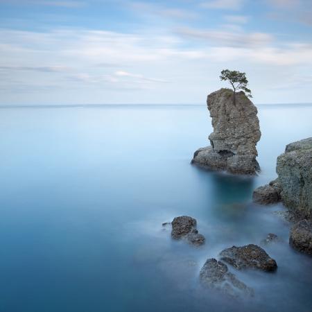 Portofino natural regional park  Lonely pine tree rock and coastal cliff beach  Long exposure photography  Liguria, Italy photo
