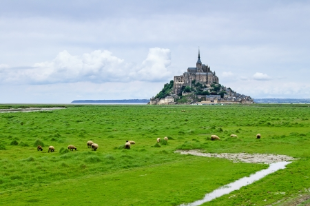 Sheep grazing near Mont Saint Michel landmark  Normandy, France, Europe  photo