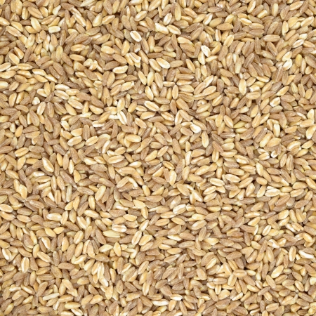 Spelt organic wheat raw cereal close up texture or background  Italian healthy eating photo