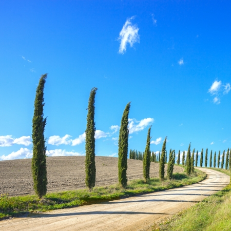 Cypress Trees rows and a white road typical landscape in Crete Senesi land near Siena, Tuscany, Italy, Europe  photo