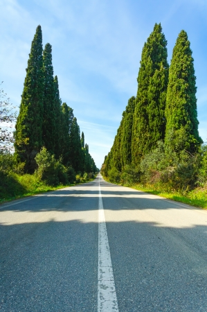 Bolgheri famous cypresses trees boulevard landscape  Maremma landmark, Tuscany, Italy, Europe  This boulevard is famous for Carducci poem  photo
