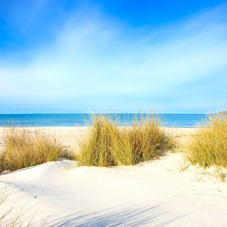 Grass on a white sand dunes beach, blue ocean and sky on background photo