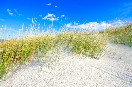 sea grass: Grass on a white sand dunes beach, and blue sky on background