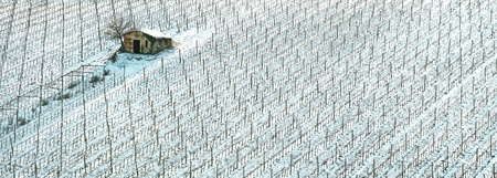 Vineyards rows covered by snow in winter, a rural small house and tree   Chianti countryside, Florence, Tuscany region, Italy Stock Photo - 17811073