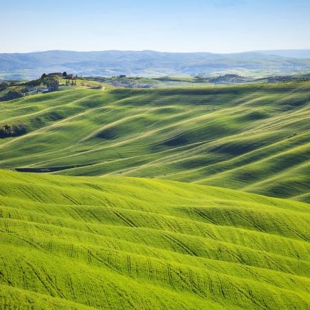 Toscana, böljande kullar på solnedgången Crete Senesi landsbygden liggande Gröna fält och en gård med träd på bakgrund