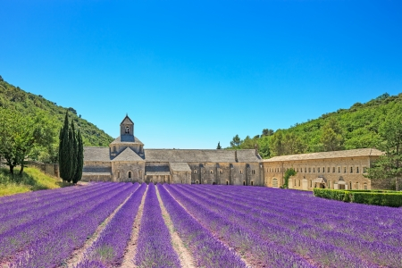 Abbey of Senanque and blooming rows lavender flowers  Gordes, Luberon, Vaucluse, Provence, France, Europe