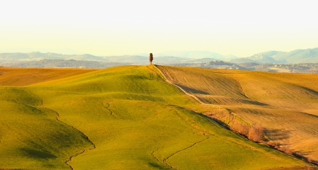 rolling: Cypress tree, rolling hills and green field, rural landscape in Crete Senesi, Siena, Tuscany  Italy