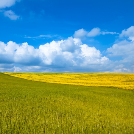 Rural landscape  Yellow and green wheat field with cloudy blue sky  Spring season in tuscany, classic italian landscape  photo