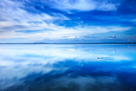 Sunset blue landscape  Little grebe diving bird in a lagoon with reflection photo
