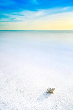 mollusk: Ocean seascape  Sea mollusk shell in a white sandy beach under blue sky