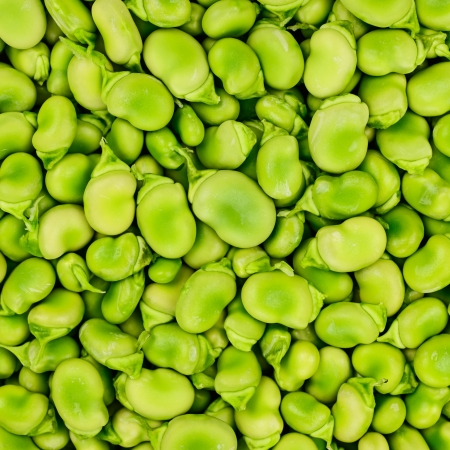 fave bean: Fresh Fava or broad bean background, texture or pattern  Stock Photo