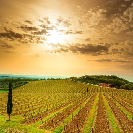 Chianti-regionen, vingårdar, träd och gård på solnedgången. Toscana, Italien, Europa.